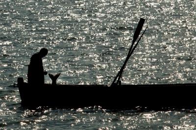 Honnan lesz balatoni hal?