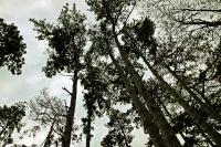 Százezrekbe kerülhet a fakivágás